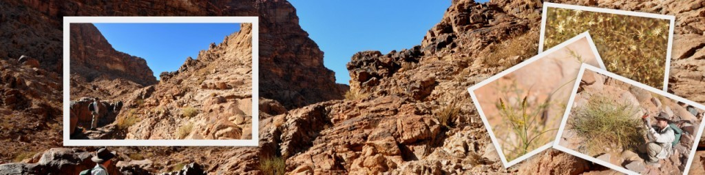 Explore new territory with the Hiking in Jordan guidebook